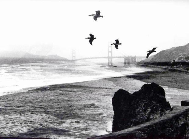 Метареалисты в Сан-Франциско, фотокомпозиция Алексея Парщикова